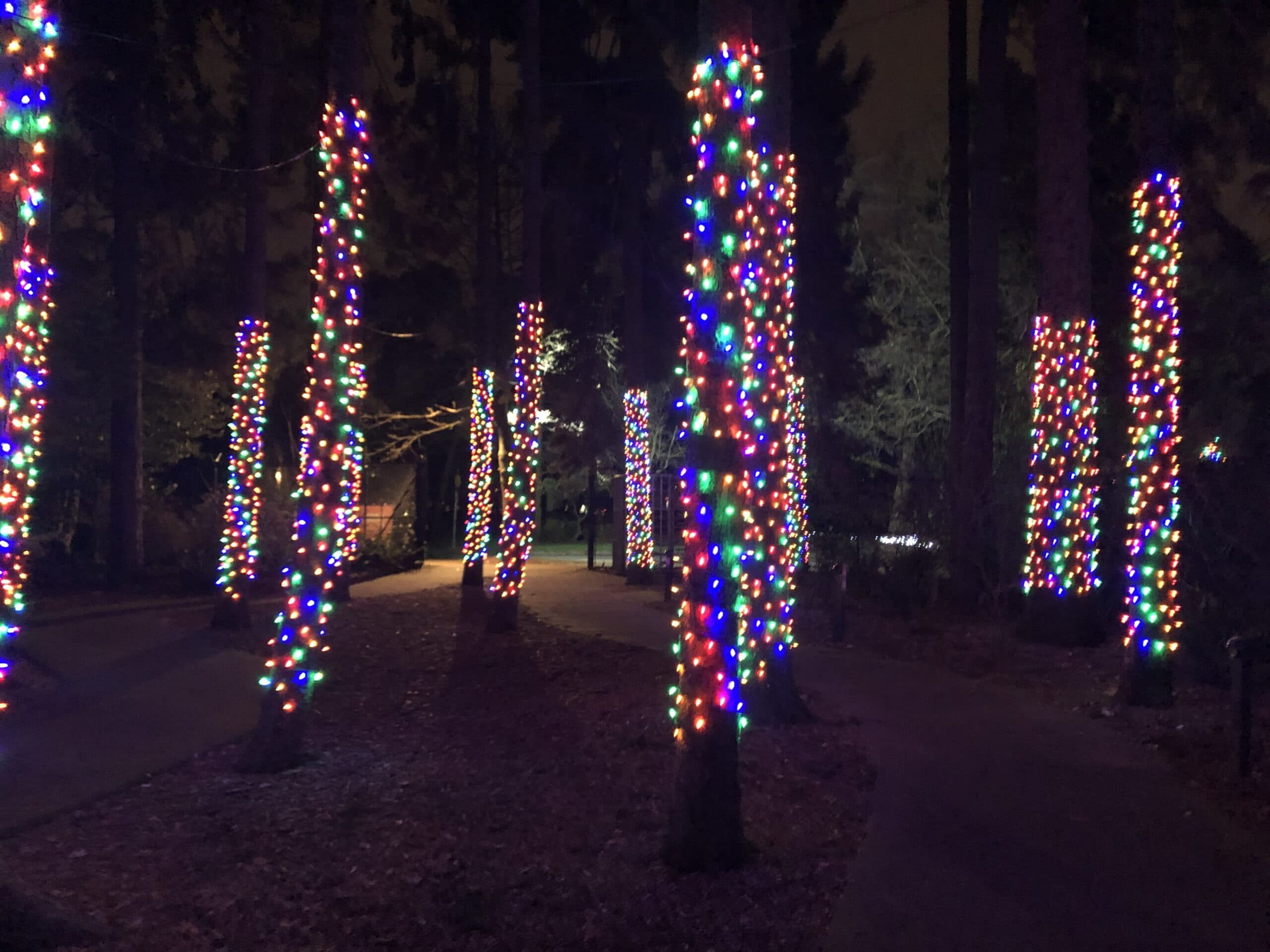 holiday lights on trees at Woodland Park Zoo