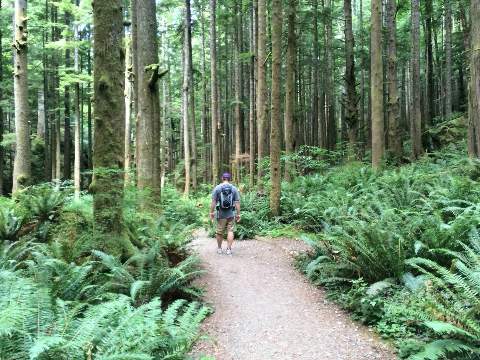 Man hiking on trail in woods, Little Si
