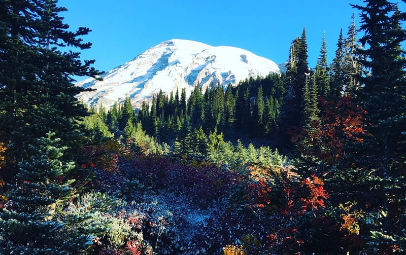 Mt. Rainier in the late spring with snow on top and wildflowers in the foreground