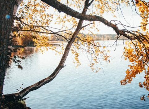 Tree with fall foliage over Green Lake