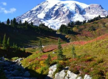 A snow capped mountain view with a running river and wildflowers in the foreground