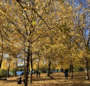 trees with golden leaves with blue sky and blue lake in background
